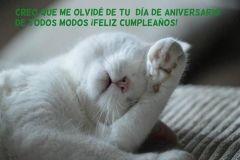 feliz-cumpleaños42