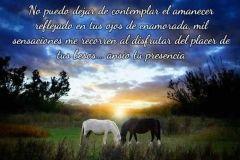 fotos-de-amor-caballos